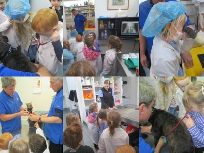 Lady Gowrie Childcare Visit Hobart Animal Hospital