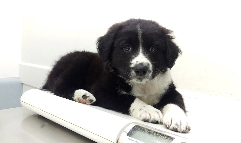 Floyd, Border Collie Cross